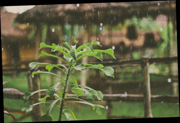 hujan1234